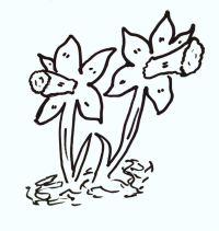 daffodil-cartoon